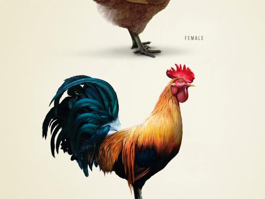 Garage Print Ad -  Rooster