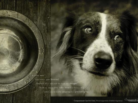 Compassionate Care Veterinary Clinic Print Ad -  Shelter dog, 1