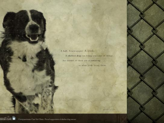 Compassionate Care Veterinary Clinic Print Ad -  Shelter dog, 4