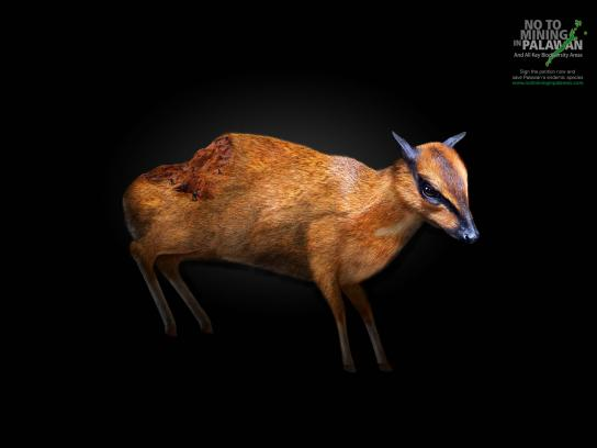 No To Mining In Palawan Print Ad -  Wounds, Mouse Deer