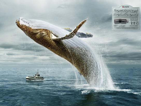 Kingston Print Ad -  Whale-Leopard