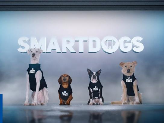 Geico Film Ad - Introducing Smartdogs - GEICO Insurance