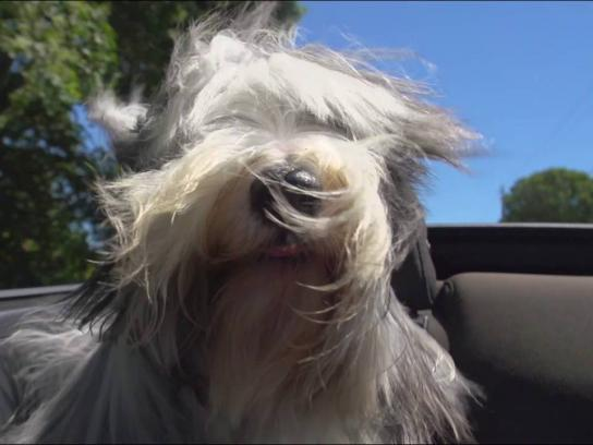 AAA Film Ad - Dogs in convertibles - Beau Duke