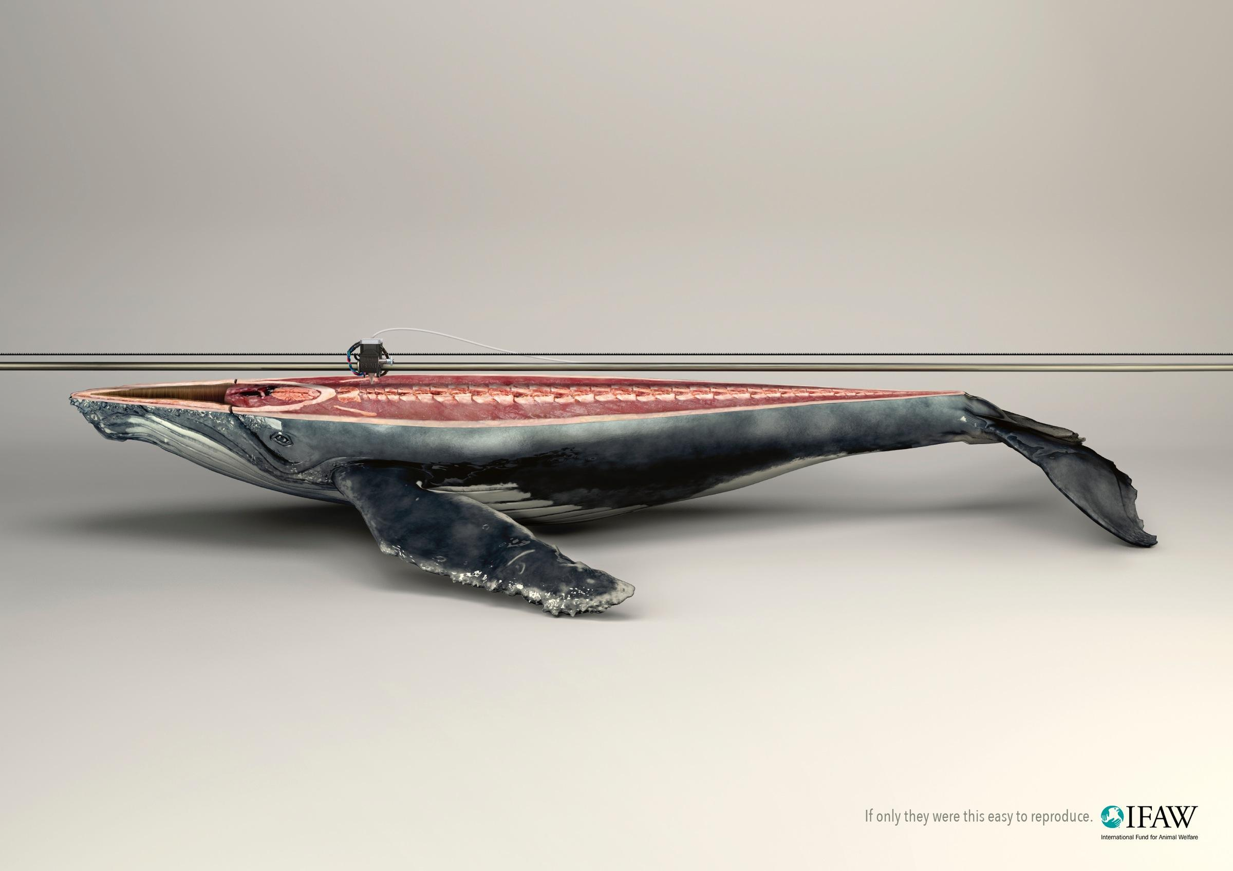 IFAW:  Whale
